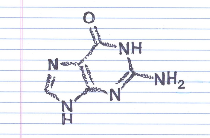 """Guanine."" Doodle by @andrescalo."