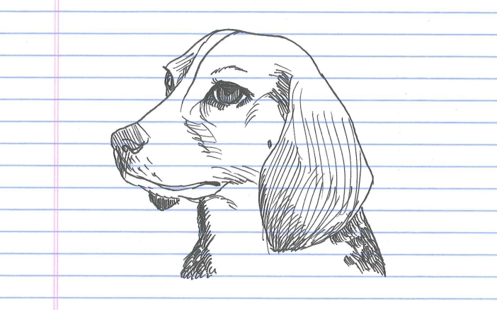 """Beagle."" Doodle by andrescalo."
