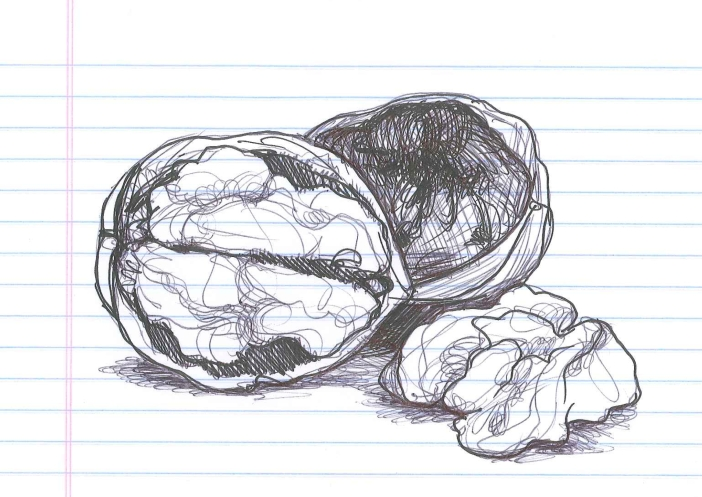 """Walnut."" Doodle by @andrescalo,"