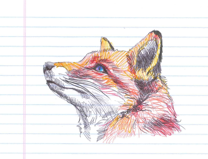 What does the fox say? Nothing. It's skulking. Doodle by @andrescalo
