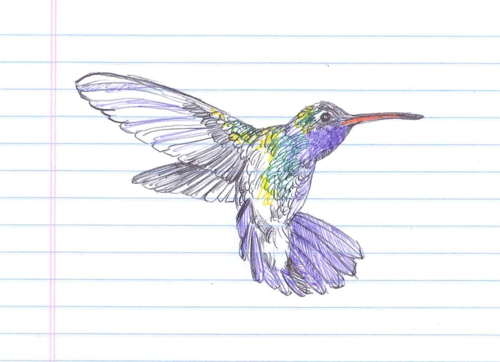 "This hummingbird must live forever. ""Nectar."" Ballpoint on lined paper. Doodle  by @andrescalo."