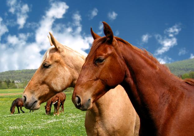 horses-1478878