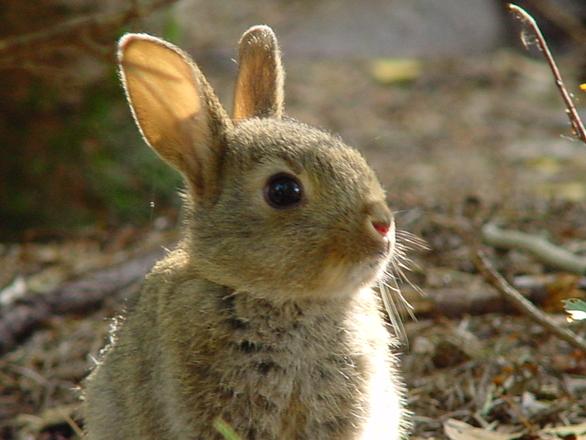 rabbit-2-1468000