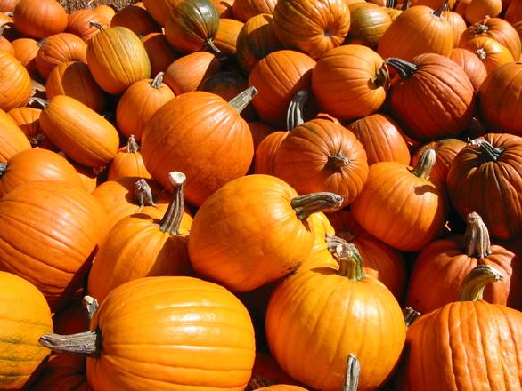 pumpkins-1469712