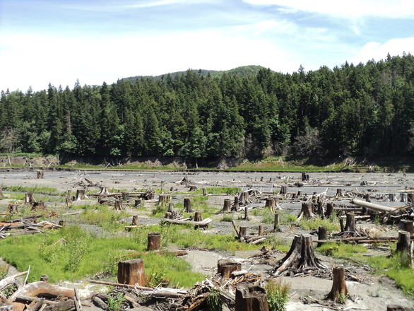 lakebed-with-tree-stumps-1331028