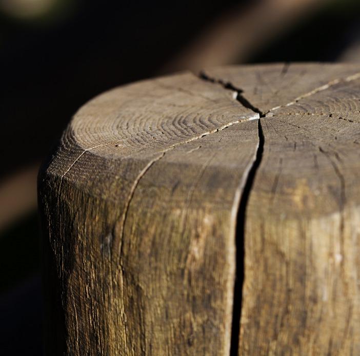 stump-1677930_1920.jpg