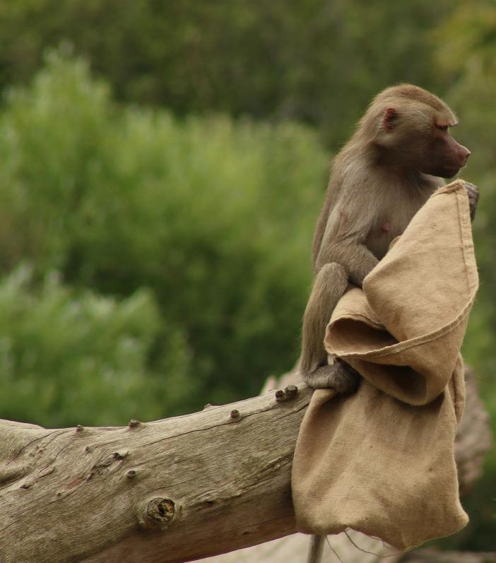 monkey-1163531_1920.jpg