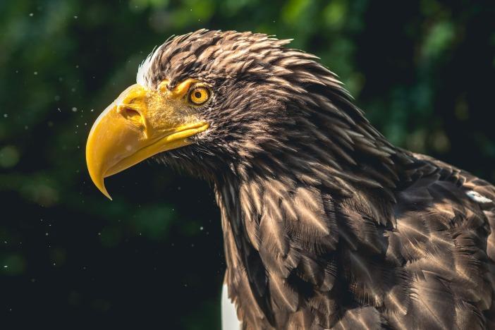 eagle-2657888_1920.jpg